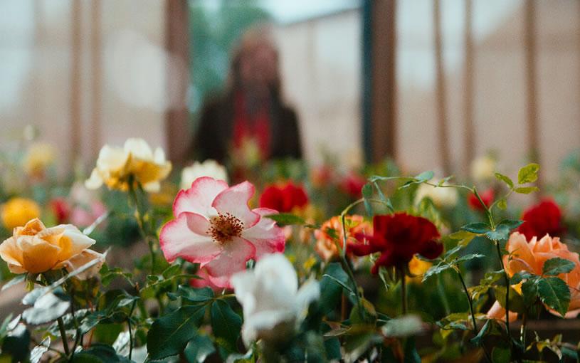 ローズメイカー 奇跡のバラ